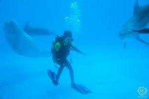 дайвинг с дельфинами подарочный сертификат краснодар